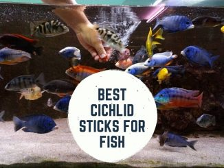 best cichlid sticks for fish