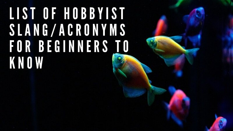 list of hobbyist slang_acronyms for beginners to know