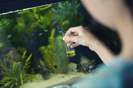 cuidado del agua del acuario