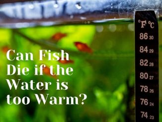 can fish die if the water is too warm