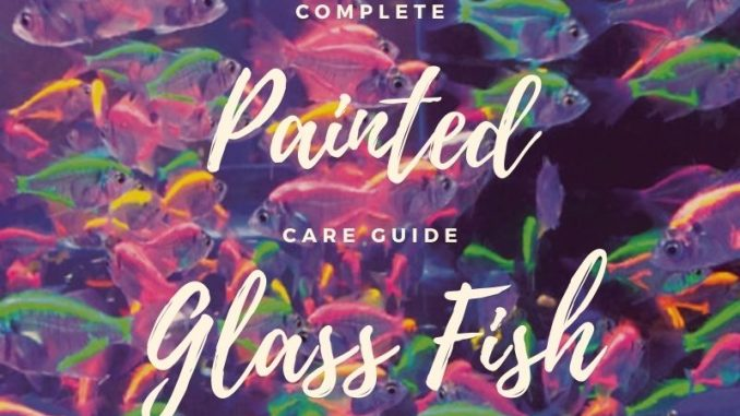 painted glass fish
