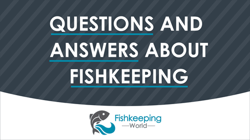 Frequently Asked Questions and Answers about Fishkeeping